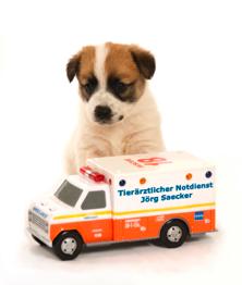 Berlin Tierarzt Notdienst Tier Rztlicher Notdienst Berlin